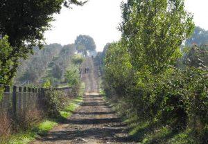 anello della Via Francigena di Campagnano