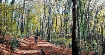 La ciclovia dei boschi e il parco naturale di Bracciano